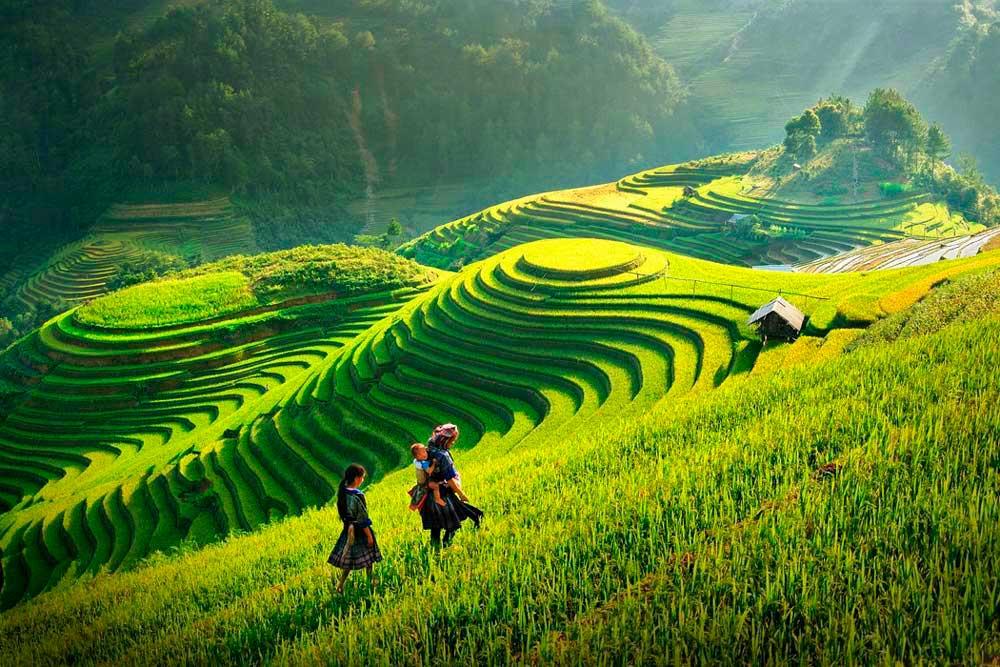 Террасные поля СаПа, Вьетнам