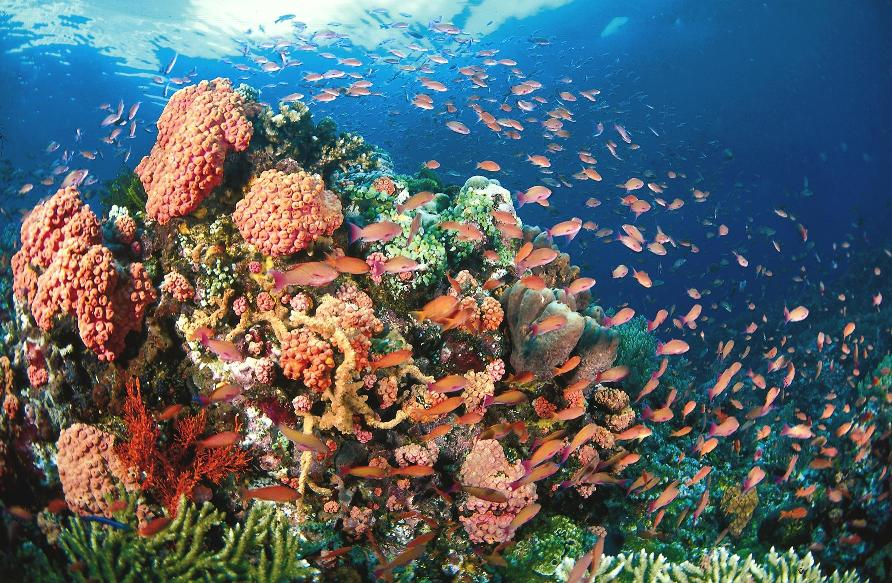 Tubbataha Reef, Филиппины