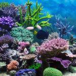 10 Самых Удивительных Коралловых Рифов