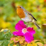 10 Лучших Певчих Птиц В Мире