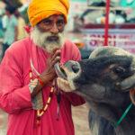 7 Святых Животных, Которым Поклоняются Люди