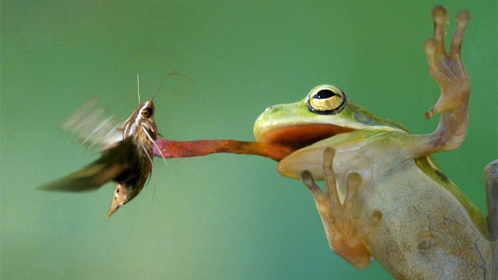 Лягушки едят моль