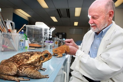 научные исследования на лягушках