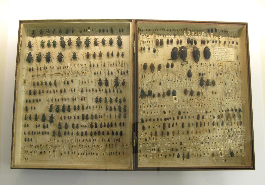 Darwin beetle collection