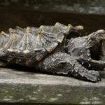10 Доисторических Животных, Которые Все Еще Живы