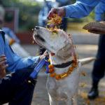 3 фестиваля, которые посвящены животным