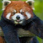 7 Удивительных Гималайских Животных
