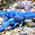 10 Редких Животных Синего Цвета