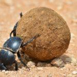 10 самых выносливых животных в мире