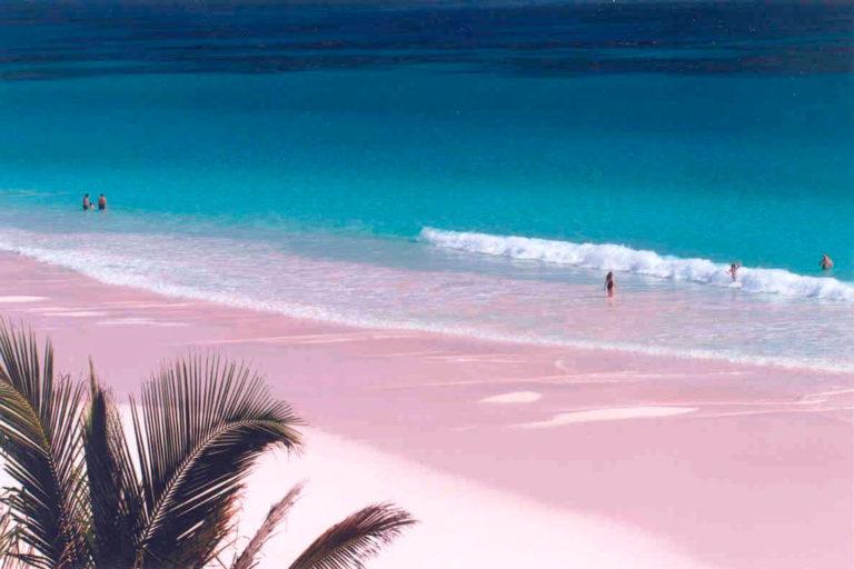 Много розовых пляжей