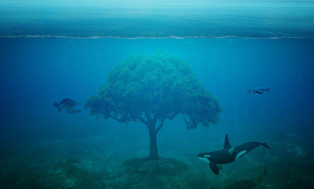морская жизнь без людей