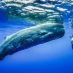 10 Самых Больших Китов В Океане