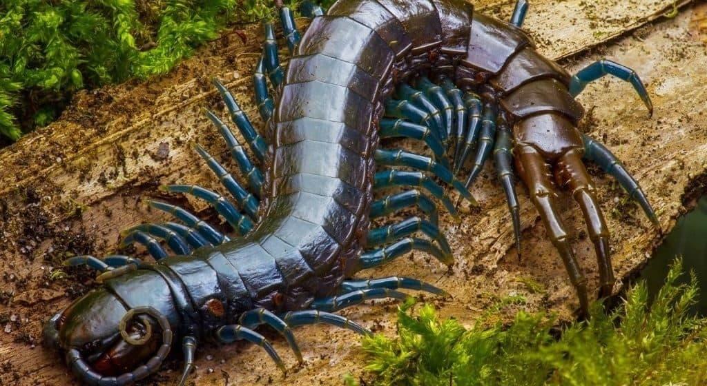Многоножки (Centipede)