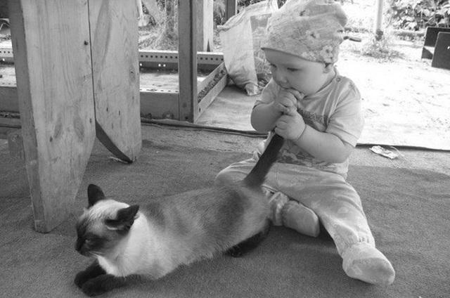 ребенок держит кота за хвост