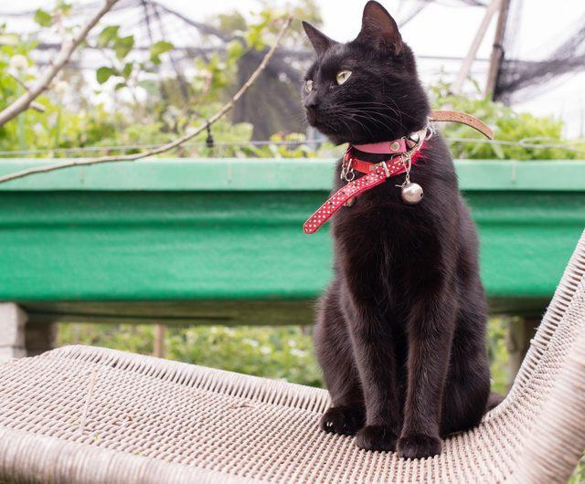 черные кошки с колокольчиком