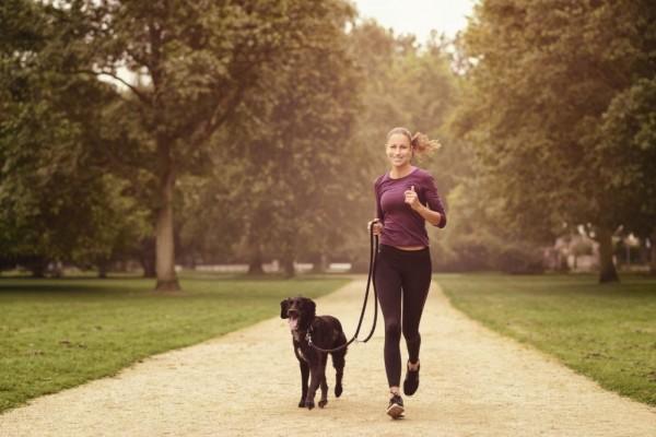 Как правильно бегать с собакой