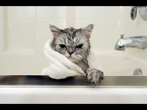 kupanie kota