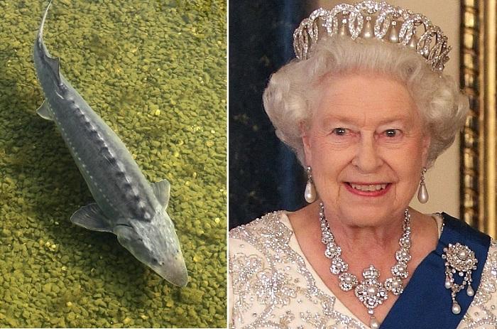 Все выброшенные на берег киты в Великобритании принадлежали королю