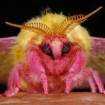 10 Самых Красивых Видов Ночных Бабочек (Мотыльков)