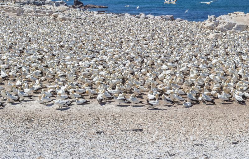 Заповедник Птичий остров, Южная Африка