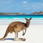 Странные вещи, которые можно найти в Австралии