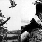 10 интересных фактов о Первой Мировой Войне