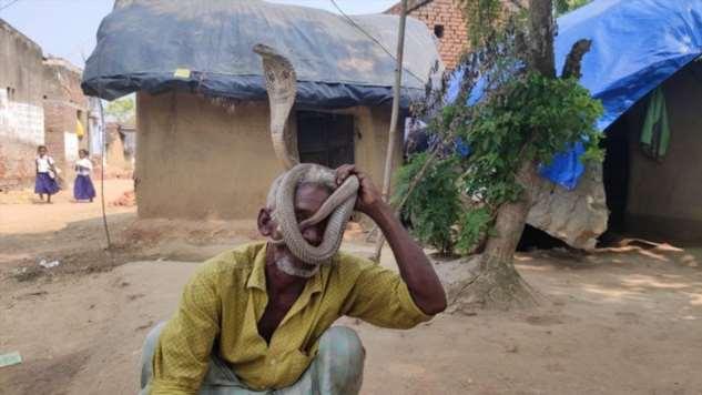 Деревня змей в индии