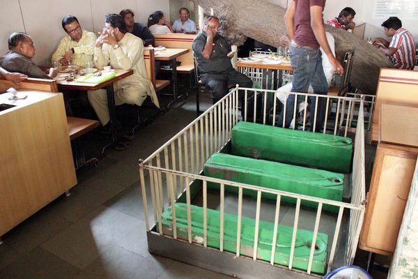 ресторан Lucky в Ахмадабаде