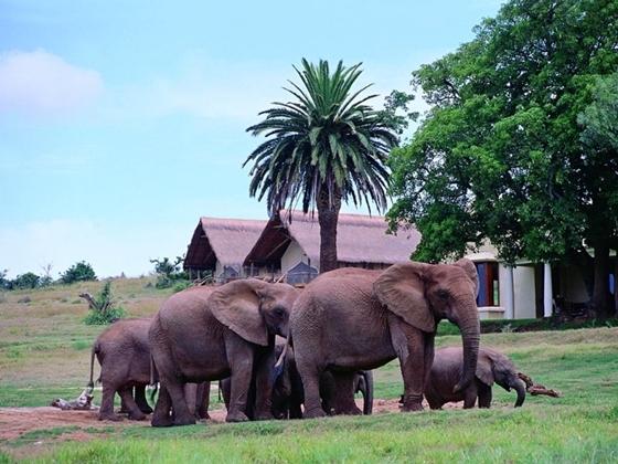 Кемпинг в слоновьем заповеднике