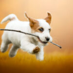 10 самых активных пород собак для энергичных владельцев
