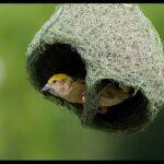 Животные Архитекторы: 10 Животных, Которые Являются Великими Строителями