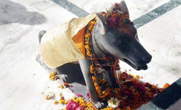 Храм собаки в Индии