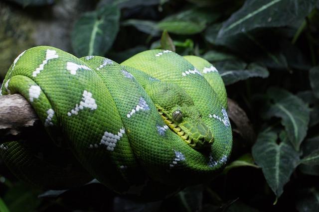 змея в тропическом лесу