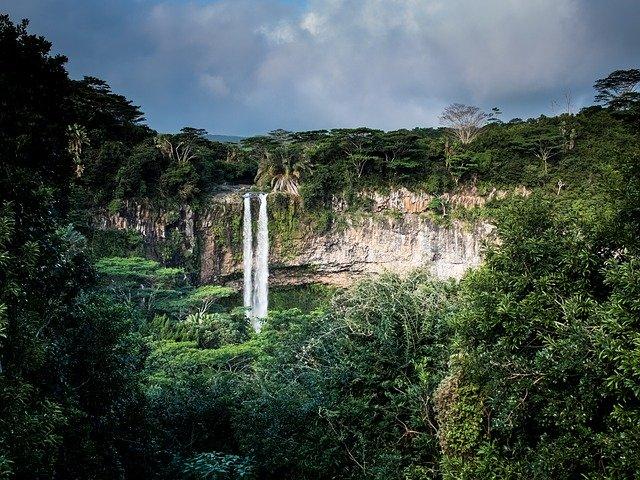 Интересные факты о тропических лесах