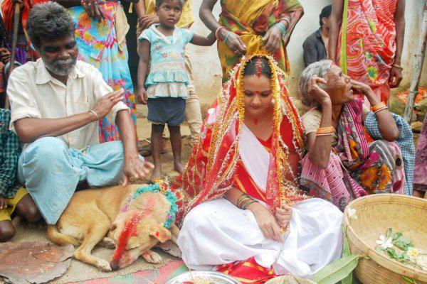 замуж за собаку в Индии