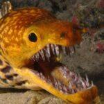 Злобная Рыба: Самые Опасные Угри В Мире
