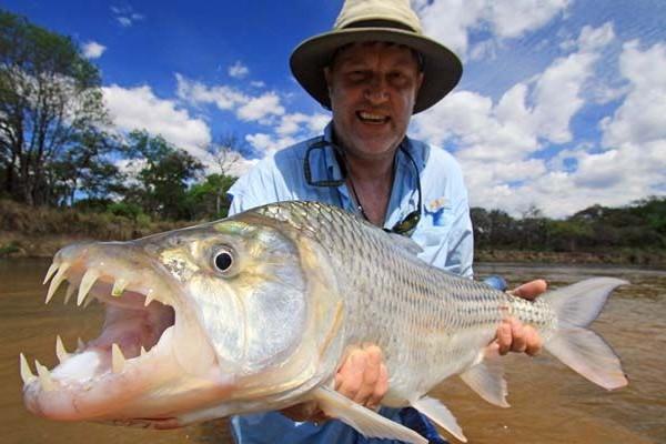 Африканская Тигровая рыба