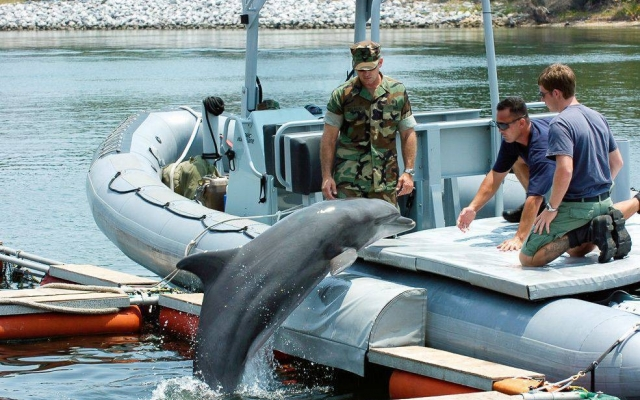 Дельфины в военной подготовке