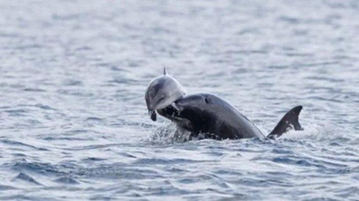 Дельфины убивают своих детей