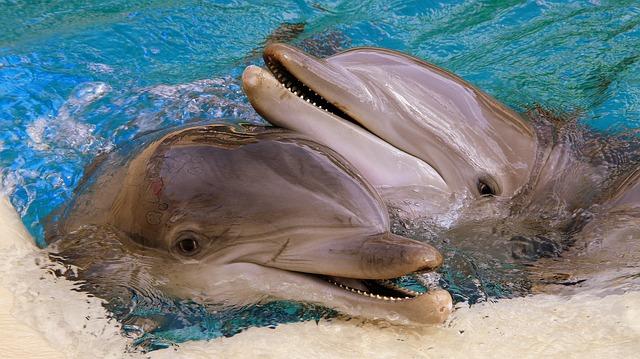 Дельфины общаются друг с другом