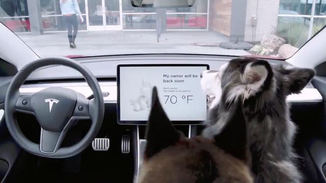 Тесла ввели новую функцию для домашних животных