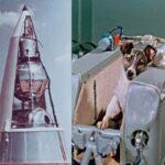 10 Первых Астронавтов-Животных, Отправившихся В Космос