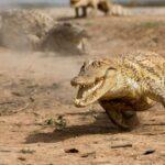 7 животных, от которых человеку не убежать