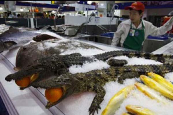 Крокодилы для Walmart