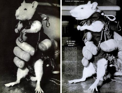 Мышь в космосе