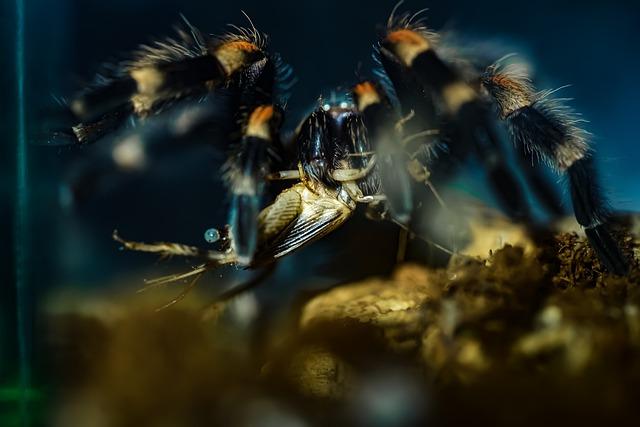 Гигантские тарантулы