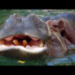 12 ужасных животных реки Нил
