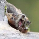 Интересные Факты О Животных, Которые Впадают В Зимнюю Спячку