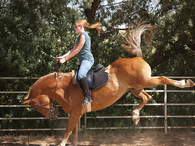 Лошади брыкаются