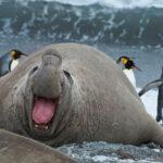 5 самых больших тюленей в мире